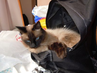 How to travel with your pets
